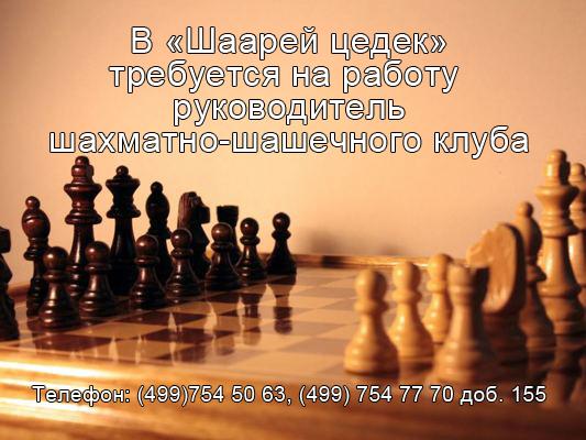шахматы вакансия